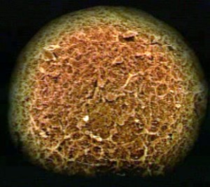 Где формируется яйцеклетка